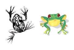 Une grenouille noire et une grenouille verte Photos libres de droits