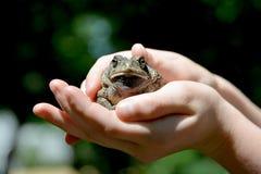 Une grenouille sérieuse Photo libre de droits