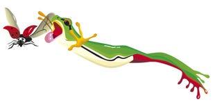 Une grenouille sautent pour attraper une coccinelle Image libre de droits
