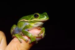 Une grenouille se repose sur le doigt d'un enfant. Photographie stock libre de droits