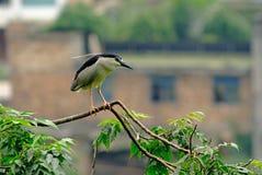 Une grue blanche et noire se tenant sur l'arbre Photo libre de droits