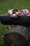 Une guirlande des roses Photographie stock