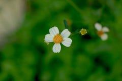Une herbe de fleur dans un jour pluvieux images stock