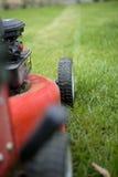 Une herbe plus mignonne Photographie stock libre de droits