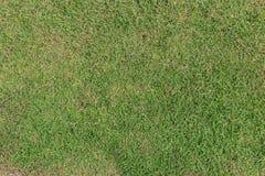 Une herbe verte Photos stock