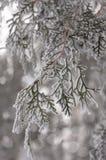 Une histoire d'hiver Photo stock