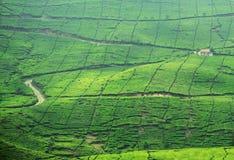 Une hutte à une plantation de thé image libre de droits