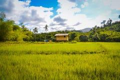 Une hutte dans un domaine de riz Images libres de droits