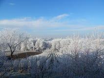 Une idylle d'hiver Photo libre de droits