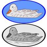 Canard Images libres de droits