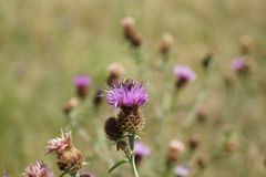 Une image capturée avec le bokeh gentil dans la nature, avec une abeille, une araignée et quelques fleurs colorées, dans Baden-Ba images stock