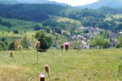 Une image captur?e avec le bokeh gentil dans la nature, avec une abeille et quelques fleurs color?es, dans Baden-Baden, l'Allemag image libre de droits