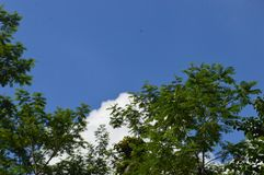 Une image d'un arbre qui a dominé au ciel image stock