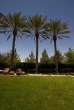 Une image de trois arbres de plam Image stock