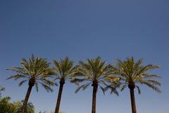 Une image des dessus des palmiers Photographie stock libre de droits