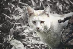 Une image noire et blanche d'un chat égoïste image stock