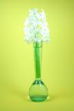Une jacinthe blanche sur un fond jaune. Photos stock