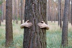 Une jeune femme étreignant un tronc d'arbre dans une forêt Images stock