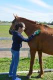 Une jeune femme de brune dans les jeans et un capot bleu balaye doucement un cheval de baie un jour ensoleillé d'été photographie stock