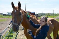 Une jeune femme de brune dans un hoodie bleu balaye doucement un cheval et des regards de baie dans la caméra un jour ensoleillé  photo libre de droits