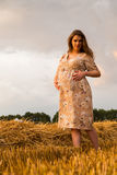 Une jeune femme enceinte parmi le champ de blé Image libre de droits