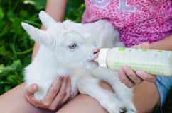 Une jeune fille alimente une chèvre nouveau-née avec du lait d'une bouteille avec le simulacre du bébé photo stock