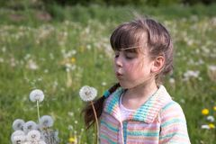 Une jeune fille pendant le début de la matinée sur un pré de ressort soufflant sur un bouquet des pissenlits blancs photos stock