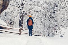 Une jeune fille a une promenade par une for?t ?paisse pendant un beau jour d'hiver photographie stock