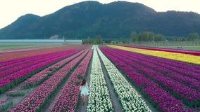 Une jolie jeune femme de brune dans une robe blanche d'?t? fonctionnant par un champ de tulipe au coucher du soleil clips vidéos