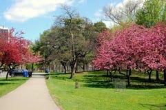 Une journée de printemps Images stock