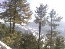 Une jungle verte épaisse couverte de neige photographie stock