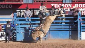 Une La Fiesta De Los Vaqueros, Tucson, Arizona images stock