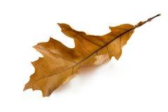 Une lame brune d'automne images stock