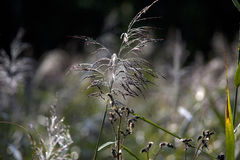 Une lame d'herbe Photographie stock libre de droits