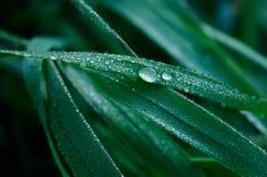 Une lame des gouttelettes d'herbe et d'eau Photographie stock