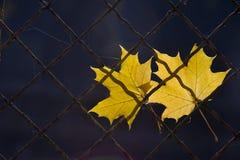 Une lame tombée d'automne sur une frontière de sécurité de fil Photo stock