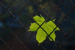 Une lame tombée d'automne sur une frontière de sécurité de fil Photos stock