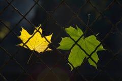 Une lame tombée d'automne sur une frontière de sécurité de fil Image libre de droits