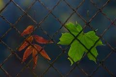 Une lame tombée d'automne sur une frontière de sécurité de fil Photographie stock libre de droits