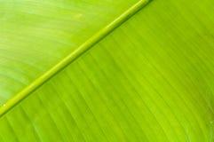 Une lame verte photo libre de droits