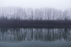 Une ligne des arbres à coté se reflète en rivière un jour brumeux Photos stock