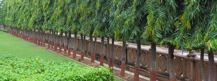Une ligne des arbres Photos stock