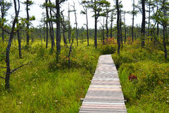 Une longue, incurvée promenade dans un marais Photographie stock