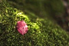 Une lumière tendre de vert et de soleil de feuille Photographie stock libre de droits