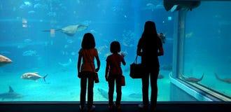 Une mère et ses enfants regardant des poissons dans un aquarium géant Image libre de droits