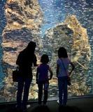 Une mère et ses enfants regardant les poissons argentés dans un aquarium géant Photo libre de droits
