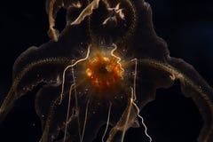 Une méduse dans l'aquarium Image libre de droits