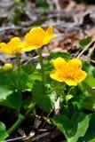 Une macro photo des fleurs jaunes dans une forêt profonde photographie stock libre de droits
