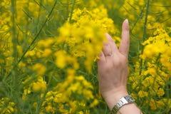 Une main de tentation et une fleur de colza oléagineux Image stock