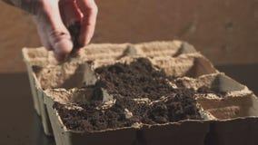 Une main du ` s d'homme met des graines dans le sol Élevage professionnel des jeunes plantes à l'intérieur banque de vidéos